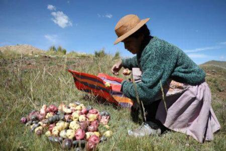principales-cultivos-peru-fidel-sanchez-alayo